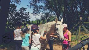 Lovas edzések iskolások részére testnevelés óra Lóra Debrecen